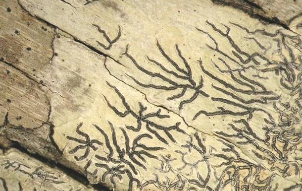 Ученые описали новую форму жизни на Земле