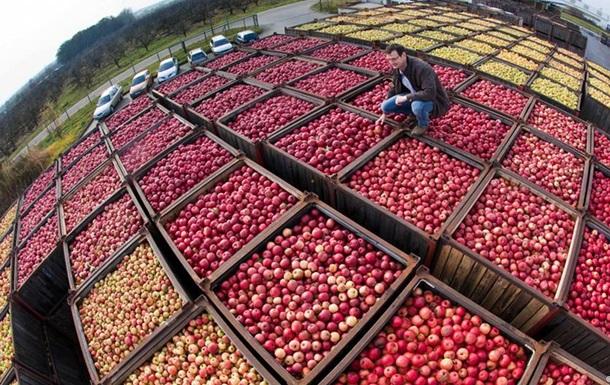 DW: Российский запрет не навредил испанским фермерам