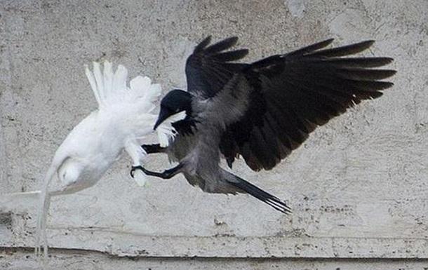Пятая птица напугала чёрную путинскую ворону