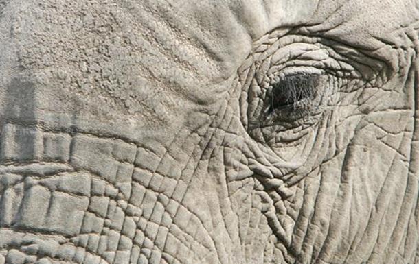 Убить слона иголкой