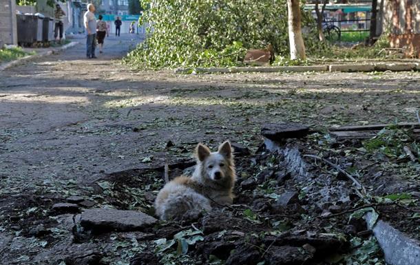 Корреспондент: В зоне АТО страдают оставленные переселенцами животные