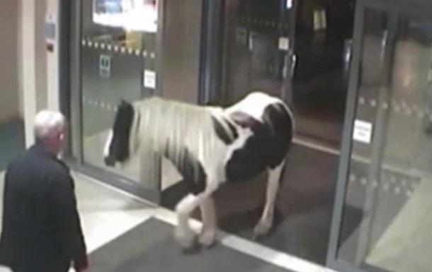В Британии конь пришел в полицию
