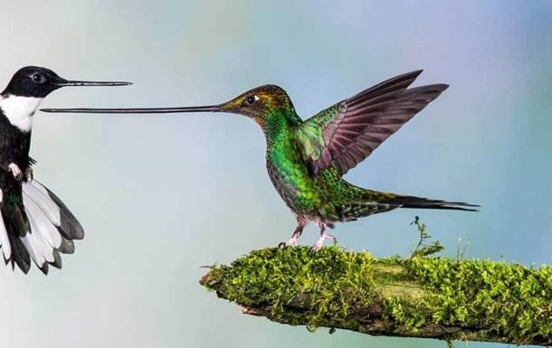 Фото победителей Wildlife Photographer of the Year 2014