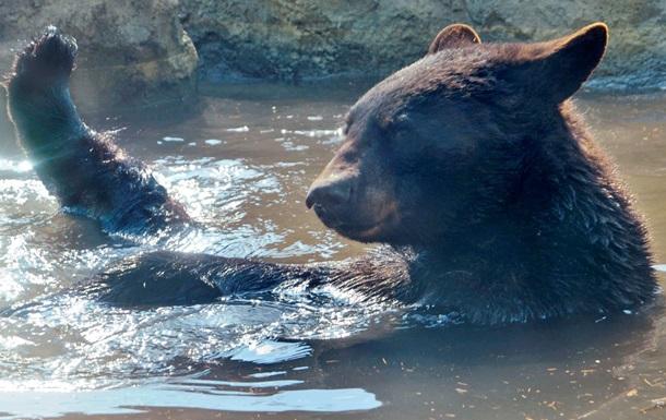 Американцам запретили делать селфи с медведями