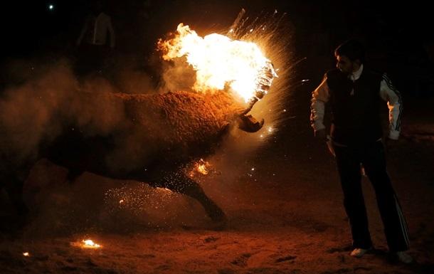 В Испании ради развлечения поджигали живых быков