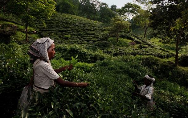 Владельца чайной плантации в Индии зарубили работники