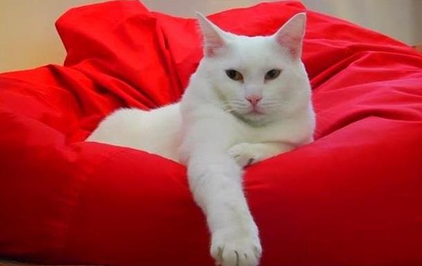 В российском  котокафе  раздают котов