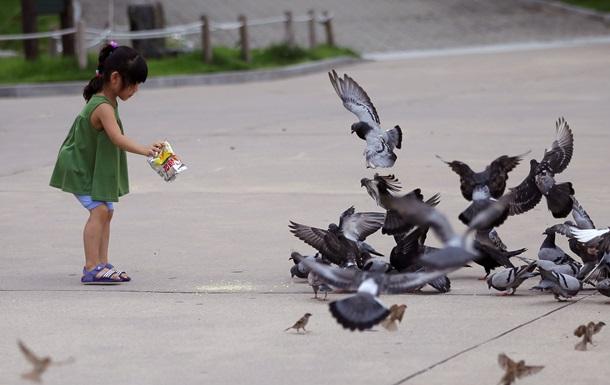 Россельхознадзор не пустил в страну голубей из Украины