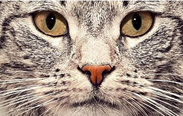 Коты займут место собак в генетическом господстве