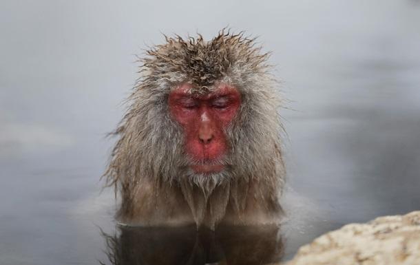 Ученые выяснили, на чем обезьяны мигрировали в Америку