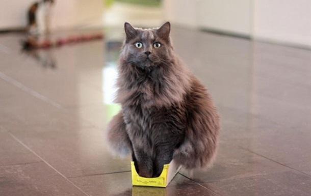 Все из-за стресса. Биологи объяснили любовь кошек к коробкам
