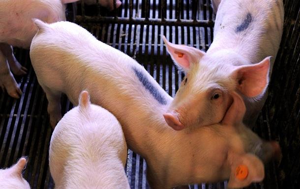 В Чехии провели операцию по замене вагины на свиной кишечник
