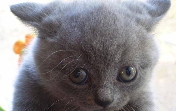 Путин подарил девочке породистого котенка