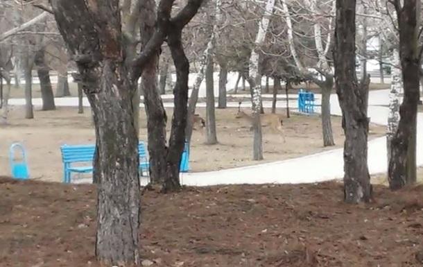 В Мариуполе по улицам бегают олени
