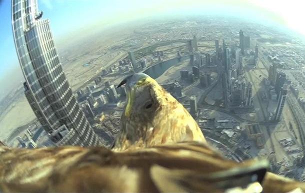 Орел-могильник снял полет с самого высокого небоскреба в мире