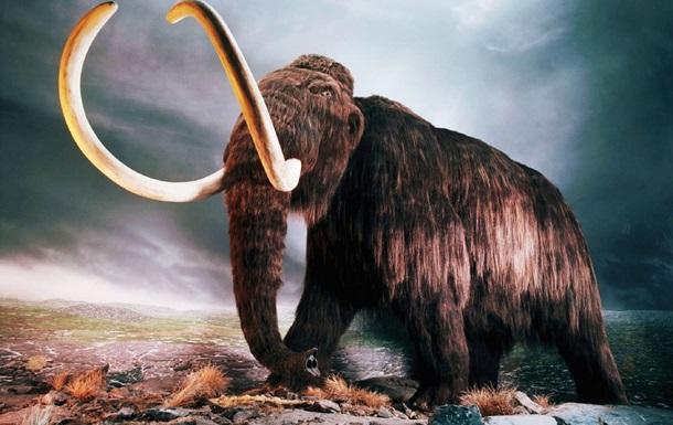 Ученые анонсировали воскрешение мамонтов