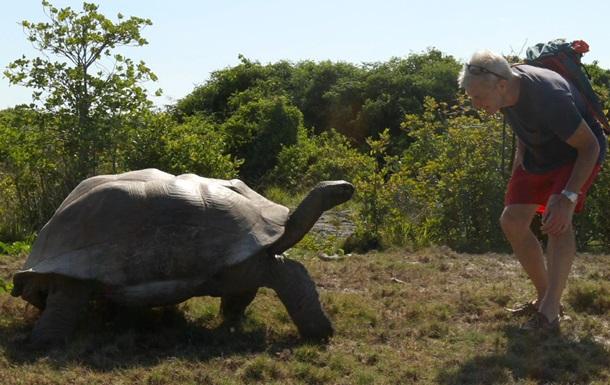 Гигантский самец черепахи  отомстил  экспедиции за прерванный интим