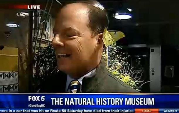 Огромный мотылек отложил яйца в ухо репортеру в прямом эфире