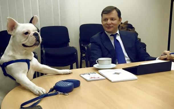 Зам Ляшко привел на заседание партии своего бульдога