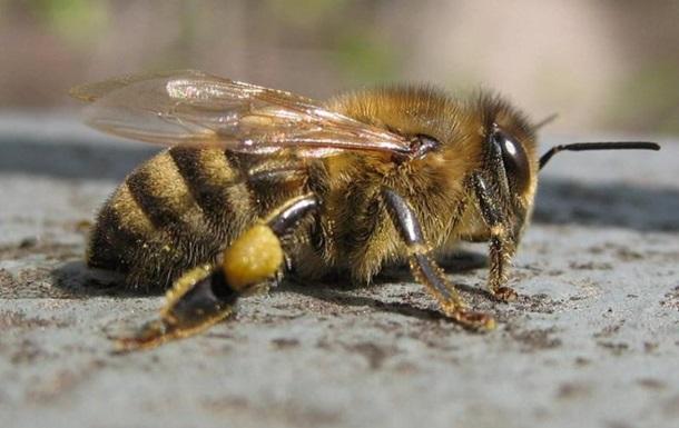 Тысячи пчел утонули в собственном меде после ДТП во Франции