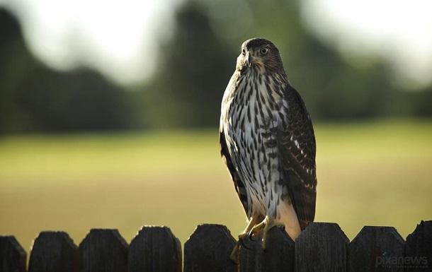 Обнаружены самые токсичные птицы на планете