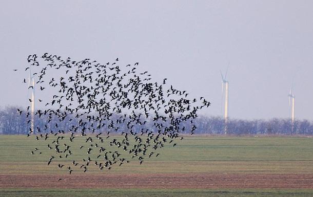 В Нью-Йорке выключат свет ради перелетных птиц