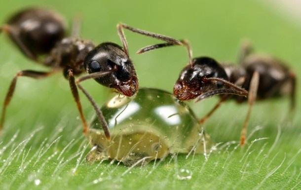 Ученые раскрыли секрет логистики муравьев