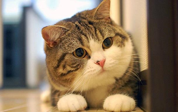 Комочек шерсти. Рейтинг самых популярных котов YouTube