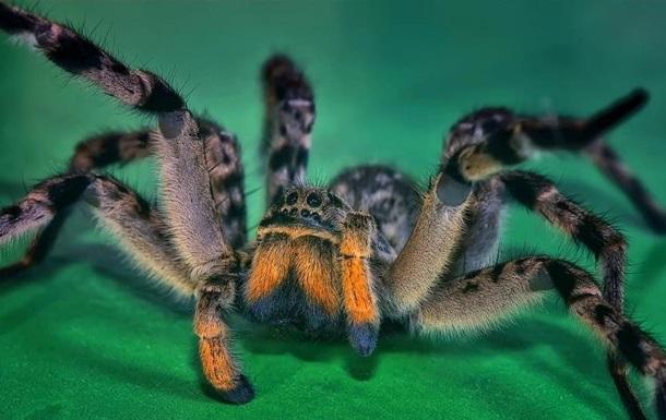 Ученые услышали у пауков  музыку любви