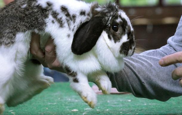 В Дании радиоведущий убил крольчонка в прямом эфире