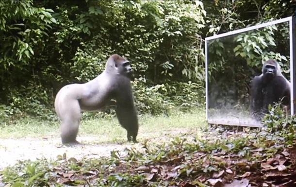 Дикие животные vs зеркала: cнятый скрытой камерой ролик стал хитом YouTube