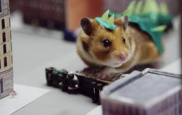 Видео  хомяка-Годзиллы  покоряет интернет