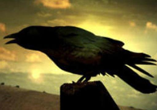 Черный ворон - птица вещая...