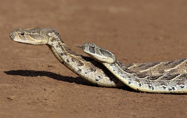 В Ивано-Франковской области из-за укусов змей госпитализированы 7 человек