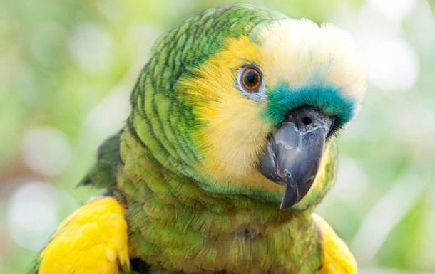 Ролик о  рыдающем  попугае становится хитом YouTube