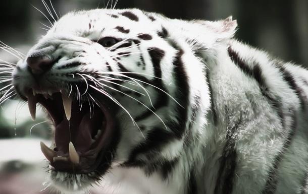 В Тбилиси на человека напал тигр
