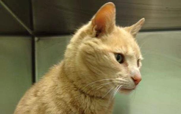 Кота из Австралии нашли в Великобритании через 15 лет