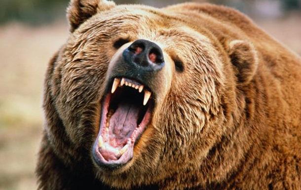 В России медведь напал на девушку в кафе