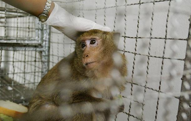 Почти телепатия: мозги обезьян впервые объединили в живой компьютер