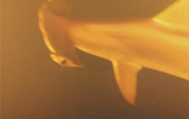 Океанологи нашли живых акул в кратере действующего вулкана