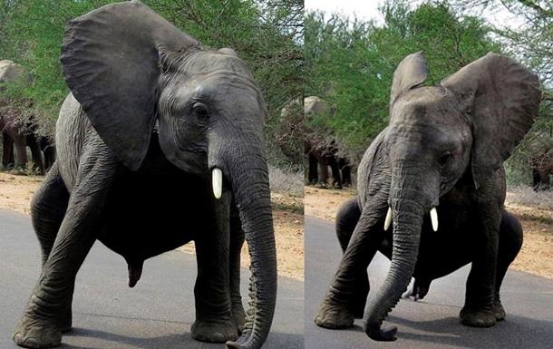 Фотограф заснял необычные кадры слоненка, танцующего брейк-данс
