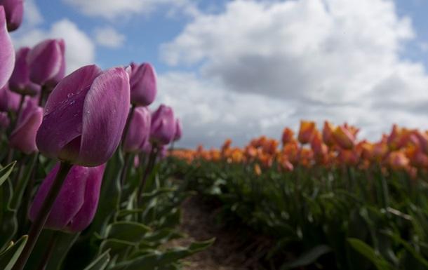 В России вновь заговорили о запрете цветов из Нидерландов