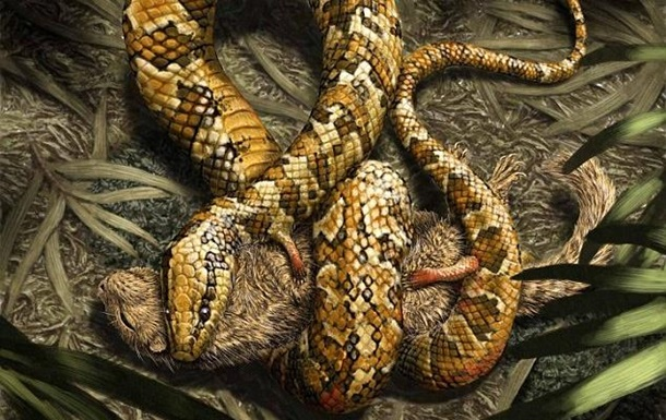 Ученые нашли змею с четырьмя конечностями