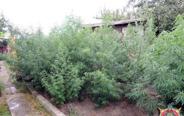 В Сумской области обнаружили конопли на 10 миллионов