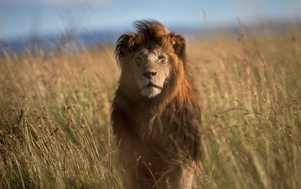 В Зимбабве ищут еще одного браконьера из США