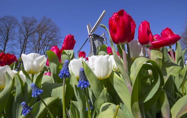 Россия ужесточает ввоз цветов из Нидерландов