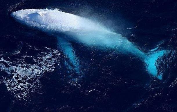 Редкого кита-альбиноса заметили у берегов Австралии