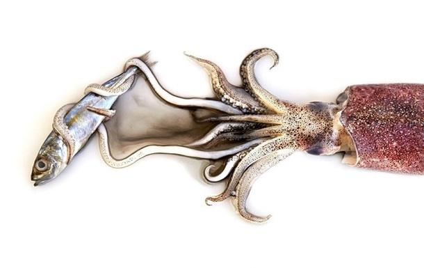 Заливное из медузы. Человек должен изменить привычки в еде, чтобы выжить
