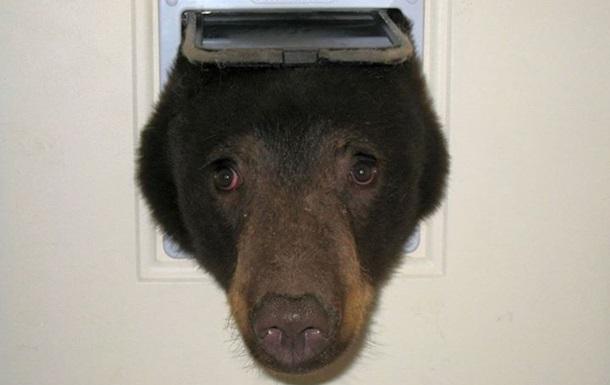В США голодный медведь застрял в двери для кошек