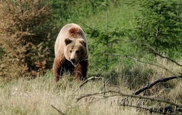 В России неизвестные переехали медведя на джипе